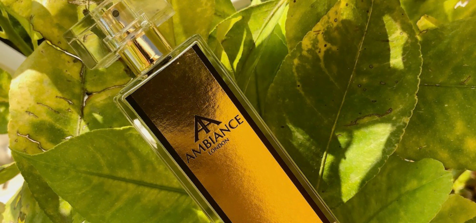 Ancienne Ambiance Colonia Collection Niche Perfumes - stand out from the rest